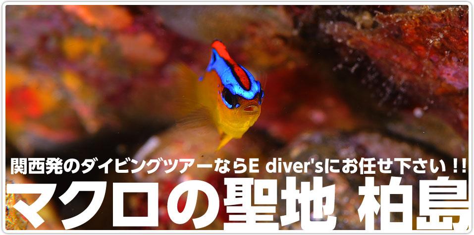 マクロの聖地柏島 関西発のダイビングツアーならEdiver'sにお任せください!