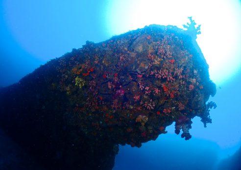 沖ノ島ダイビング後に花火大会!! 盛り上がりました^^