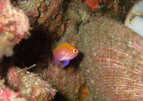 10月の柏島は新たな生物が見れましたよ^^