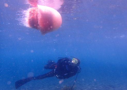 予定変更して青海島で七夕ダイビングをしてきました!!