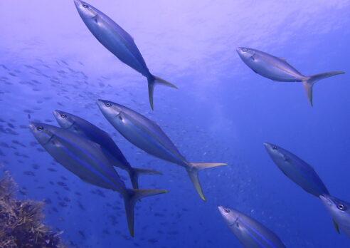 音海に下見に行ってきました!!来季から冠島も潜りますよ!!